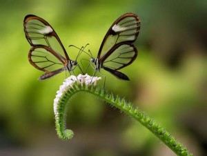 butterflies lovers