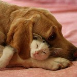 dog-cat hug
